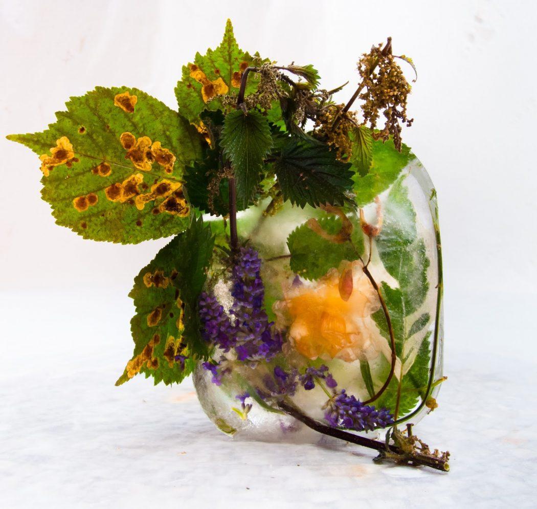 Flora 24