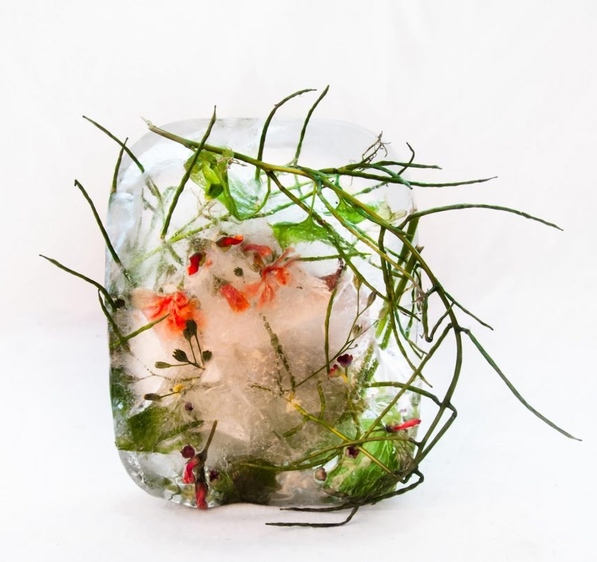Flora 25